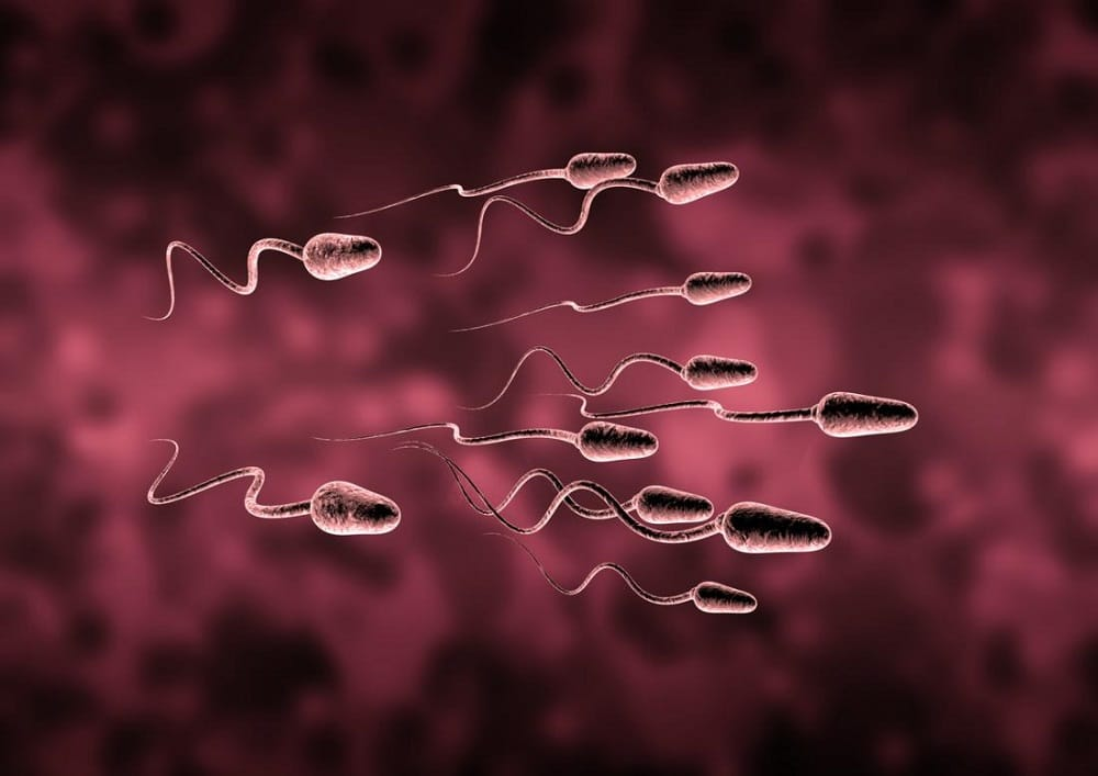 Sperm Counts