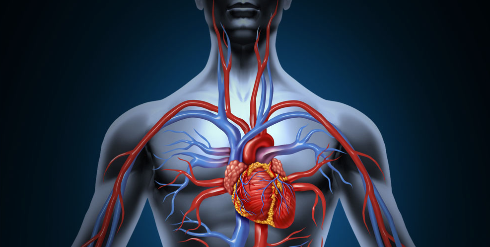 Lower Blood Pressure and Increase Blood Circulation